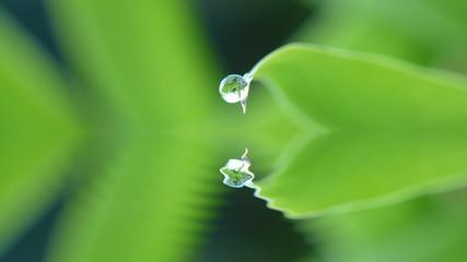 Goutte d'eau en reflet