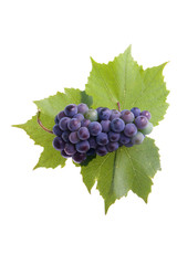 Grapes with three leafs