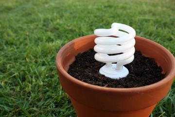 Florecent Light Bulb Plant