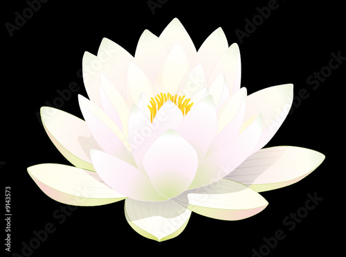 """Fleur De Lotus fleur de lotus blanc sur fond noir"""" stock image and royalty-free"""