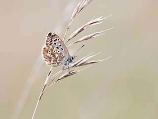 A photography of a beautiful little butterfly