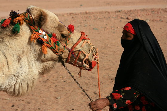 bedouin woman and camel
