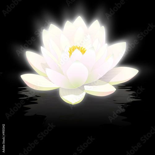 fleur de lotus blanc sur fond noir avec reflets photo libre de droits sur la banque d 39 images. Black Bedroom Furniture Sets. Home Design Ideas