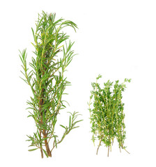 Bunch of rosemary and thyme in isolated white background