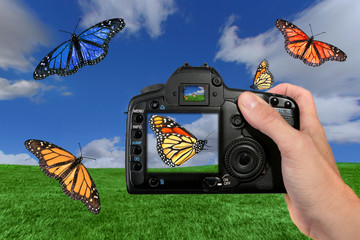 Different Butterflies Being Photographed by a Digital Camera