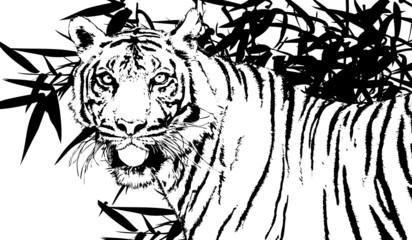 illustration of a Sumatra' s Tiger