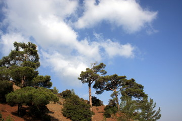 Green Trees on a hilltop with a blue sky with clouds background
