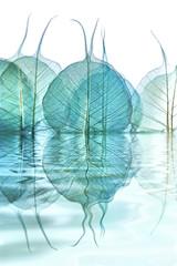Obraz reflets de feuilles - fototapety do salonu