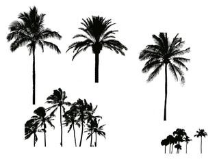 silhouette de palmier pour illustration