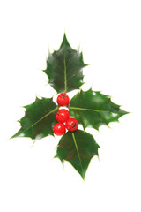 four holly leaves with four red berries