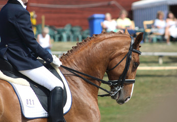 Dressage with beautiful brown horse and rider