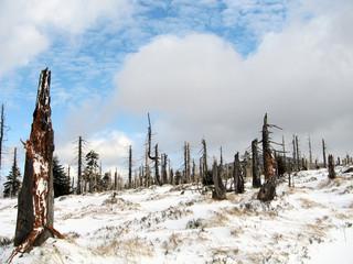 Waldsterben