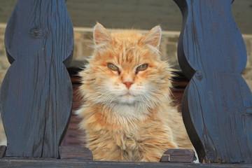 Katze schaut dich an