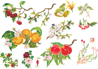 different berries and flowers