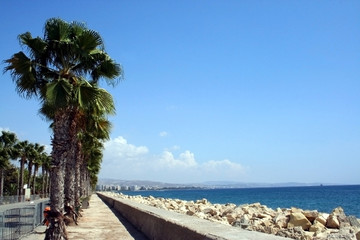 Palm trees by beach on the island of Cyprus.