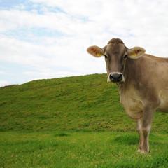 die kuh macht muh XIII