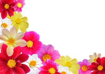 Flofal composition of different colours dahlia.