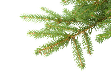 Fir tree branch. Christmas decoration.