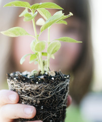 Child holding plant with soil and roots showing