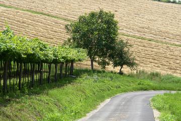 campagna; strada; vigneto; coltivazione
