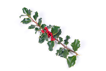 Branch of real holly, with red berries, on the white background