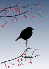 Silhouette petit oiseau sur branche