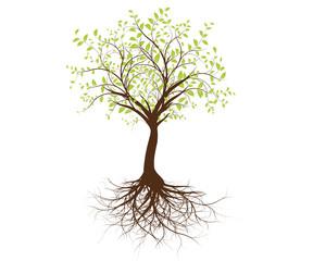 vecteur série - arbre vectoriel isolé sur fond blanc