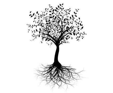 vecteur série, jeune arbre avec racines - vector tree with roots