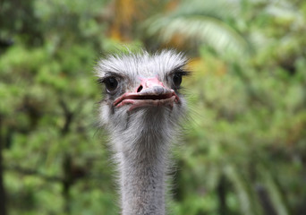 picture of an ostrich in a park