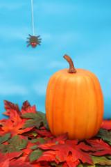 pumpkin on orange and green fall leaves