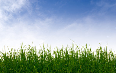green grass against clear sky background