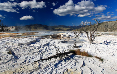 The Mammoth Hot Spring area in Yellowstone National Park
