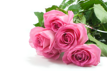 five pink roses isolated on white background