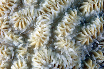 Coral Polyp Background