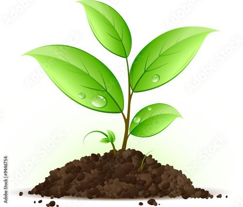 Jeune plante verte fichier vectoriel libre de droits sur for Plante qui pousse