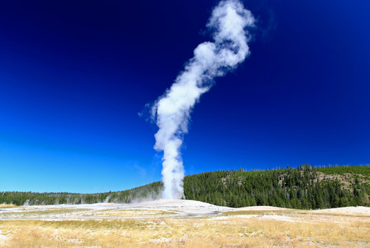 The Old Faithful Geyser in Yellowstone National Park