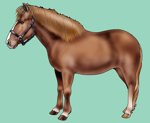 Illustration of a Pony of Iceland - Realistic style