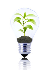eco concept: lightbulb with young plant inside
