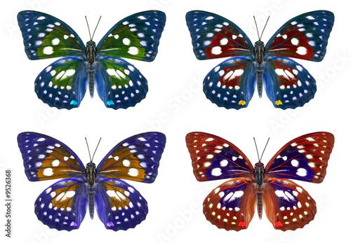 Farfalle colorate immagini e fotografie royalty free su for Foto farfalle colorate