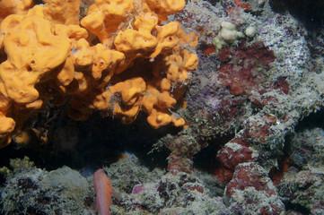 Underwater life in Aegian Sea