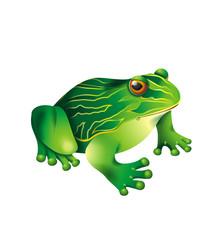 Green frog vector illustration