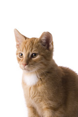 detail of a small cat on white background