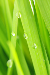 close-up of green grass...........