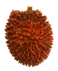 Tropical Pulasan fruit.