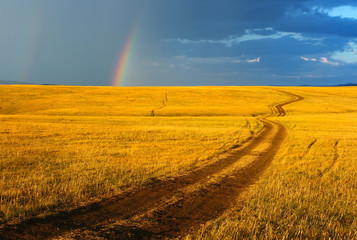 Beautiful yellow landscape with the sun grass and brown road.