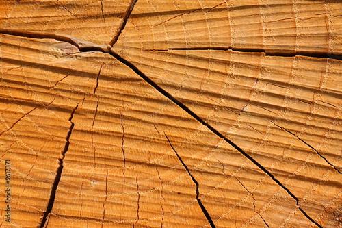 Coupe d 39 un tronc d 39 arbre photo libre de droits sur la - Coupe transversale d un tronc d arbre ...