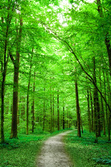 green nature. pathway in the forest