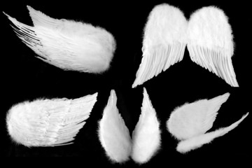 Many Angles of White Guardian Angel Wings Isolated on Black