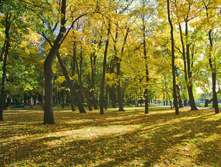 autumn park with maples