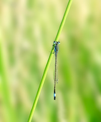 Dragonfly. Russian nature, wilderness world.